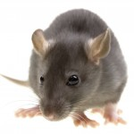 Pest Control Lymington