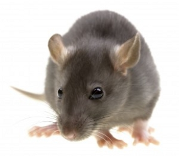 Pest Control Whitchurch